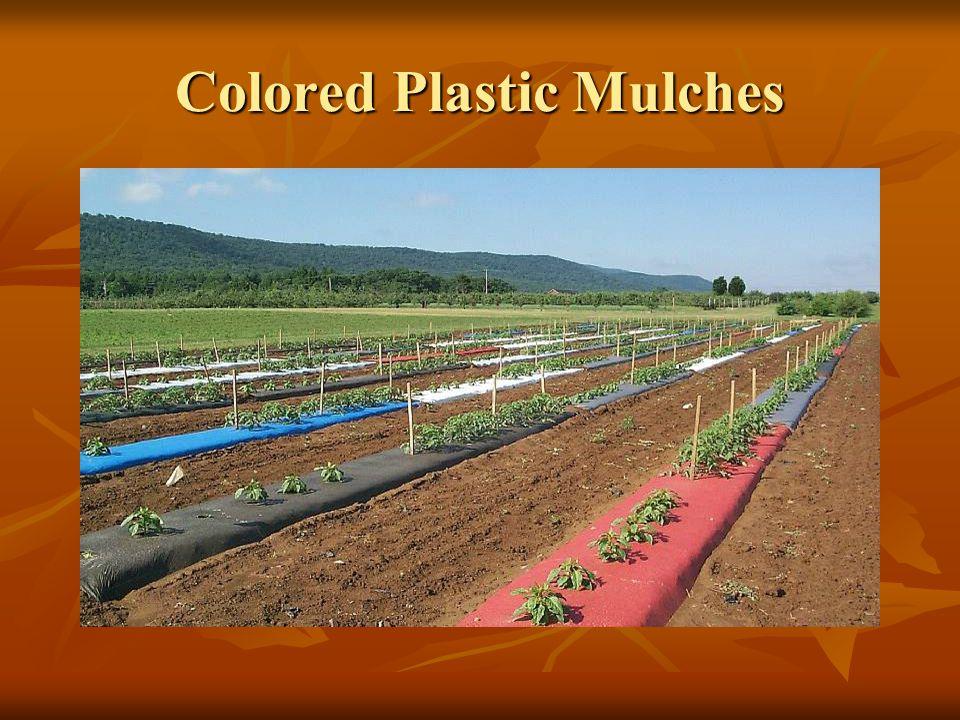 Colored Plastic Mulches