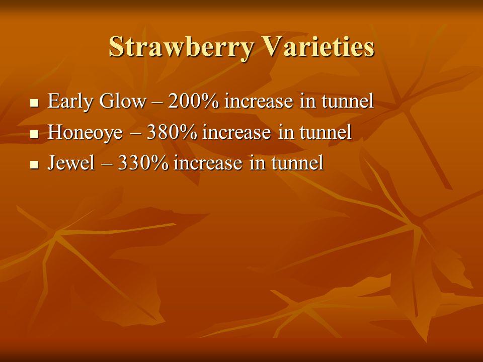 Strawberry Varieties Early Glow – 200% increase in tunnel Early Glow – 200% increase in tunnel Honeoye – 380% increase in tunnel Honeoye – 380% increase in tunnel Jewel – 330% increase in tunnel Jewel – 330% increase in tunnel
