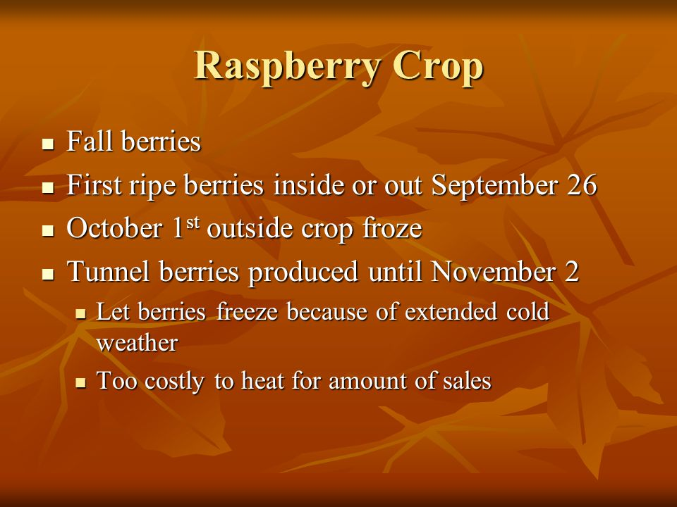 Raspberry Crop Fall berries Fall berries First ripe berries inside or out September 26 First ripe berries inside or out September 26 October 1 st outs