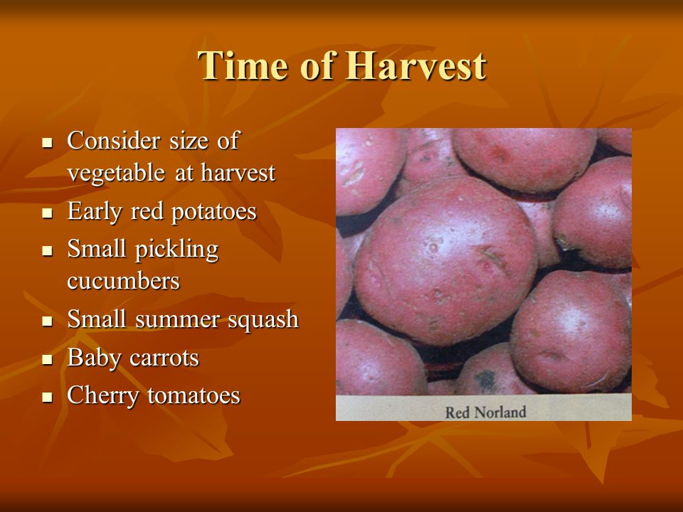 Time of Harvest Consider size of vegetable at harvest Consider size of vegetable at harvest Early red potatoes Early red potatoes Small pickling cucum