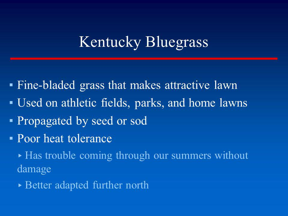 Kentucky Bluegrass Fine-bladed grass that makes attractive lawn Used on athletic fields, parks, and home lawns Propagated by seed or sod Poor heat tol