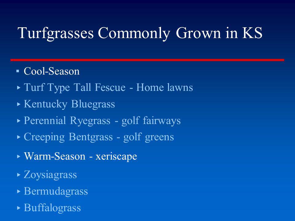 Turfgrasses Commonly Grown in KS Cool-Season Turf Type Tall Fescue - Home lawns Kentucky Bluegrass Perennial Ryegrass - golf fairways Creeping Bentgra