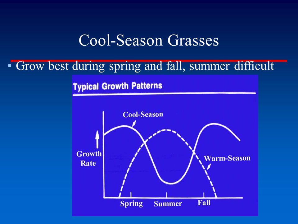 Kentucky Bluegrass Numerous Problems: Summer Patch Can Be Severe