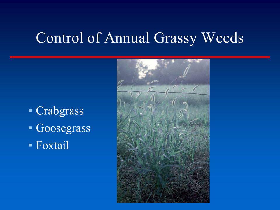 Control of Annual Grassy Weeds Crabgrass Goosegrass Foxtail