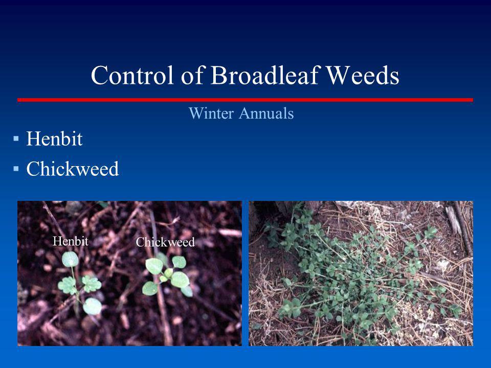 Control of Broadleaf Weeds Winter Annuals Henbit Chickweed