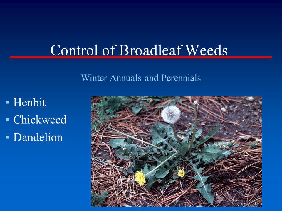 Control of Broadleaf Weeds Winter Annuals and Perennials Henbit Chickweed Dandelion