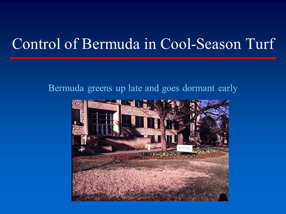 Control of Bermuda in Cool-Season Turf Bermuda greens up late and goes dormant early