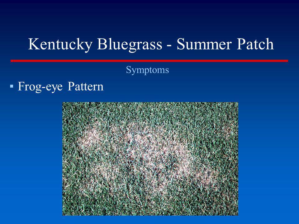 Kentucky Bluegrass - Summer Patch Symptoms Frog-eye Pattern