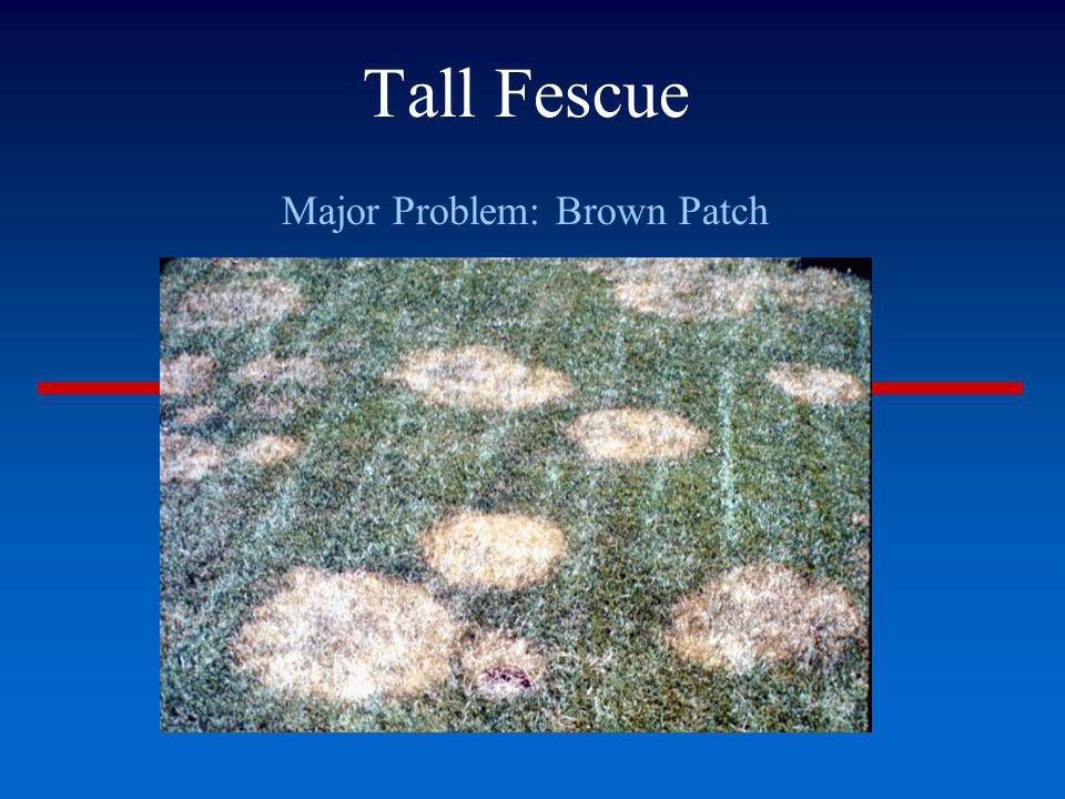 Brown Area in Otherwise Green Lawn If No Signs of Diseases or Insects, Probably Burn Female dog Gas spill Car exhaust Dumped salt water from ice cream maker Shallow soil due to underlying rock