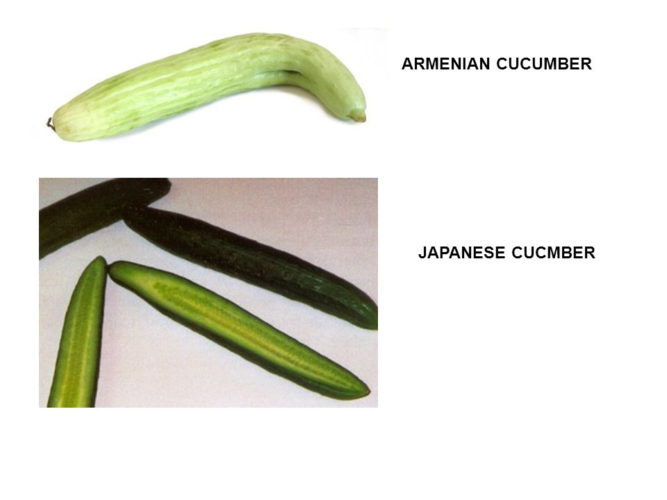 ARMENIAN CUCUMBER JAPANESE CUCMBER
