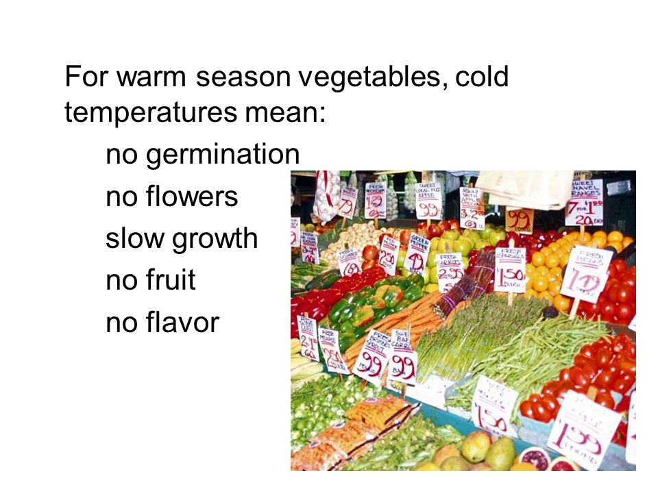 For warm season vegetables, cold temperatures mean: no germination no flowers slow growth no fruit no flavor