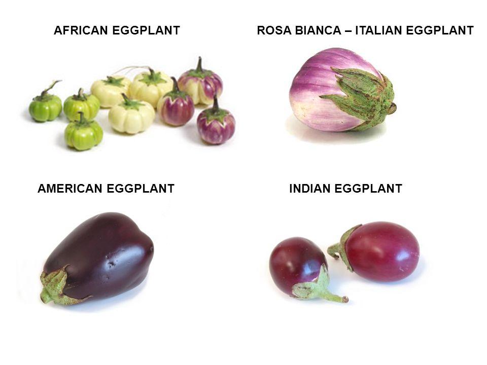 AFRICAN EGGPLANT INDIAN EGGPLANT ROSA BIANCA – ITALIAN EGGPLANT AMERICAN EGGPLANT