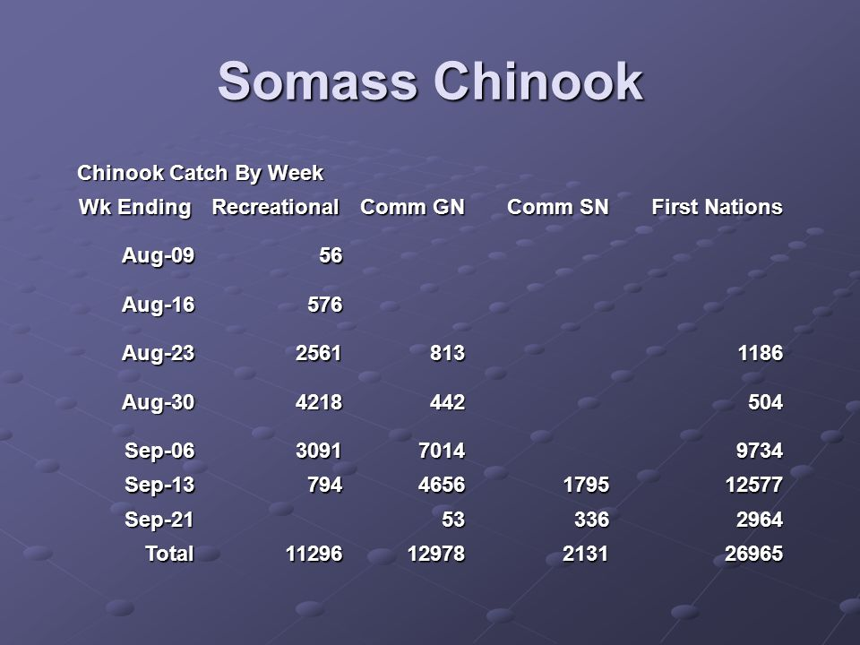 Somass Chinook Chinook Catch By Week Wk Ending Recreational Comm GN Comm SN First Nations Aug-0956 Aug-16576 Aug-2325618131186 Aug-304218442504 Sep-06309170149734 Sep-137944656179512577 Sep-21 533362964 Total1129612978213126965