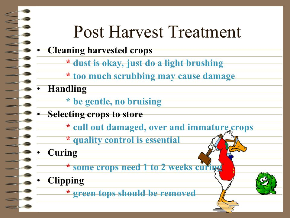 Post Harvest Treatment Timing * it is everything * frost is a big factor, affecting pre-harvest, post-harvest, and frost protection * root crops are best left as long as possible * harvesting during cool weather keeps crops cool * avoid harvesting during muddy conditions
