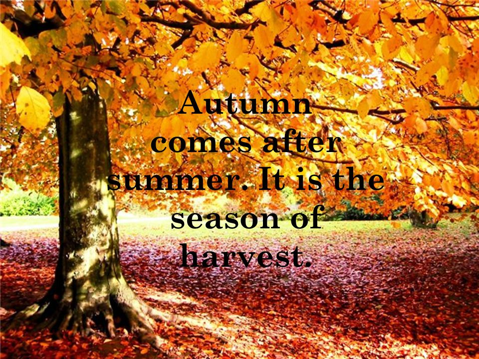 Autumn comes after summer. It is the season of harvest.