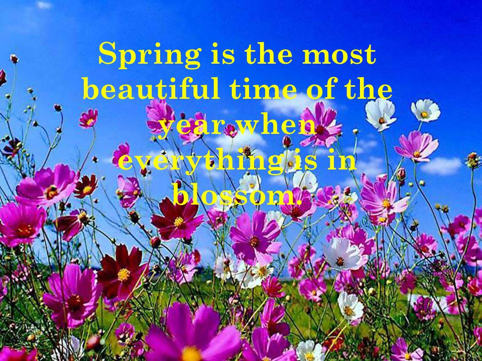 Spring is the most beautiful time of the year when everything is in blossom.