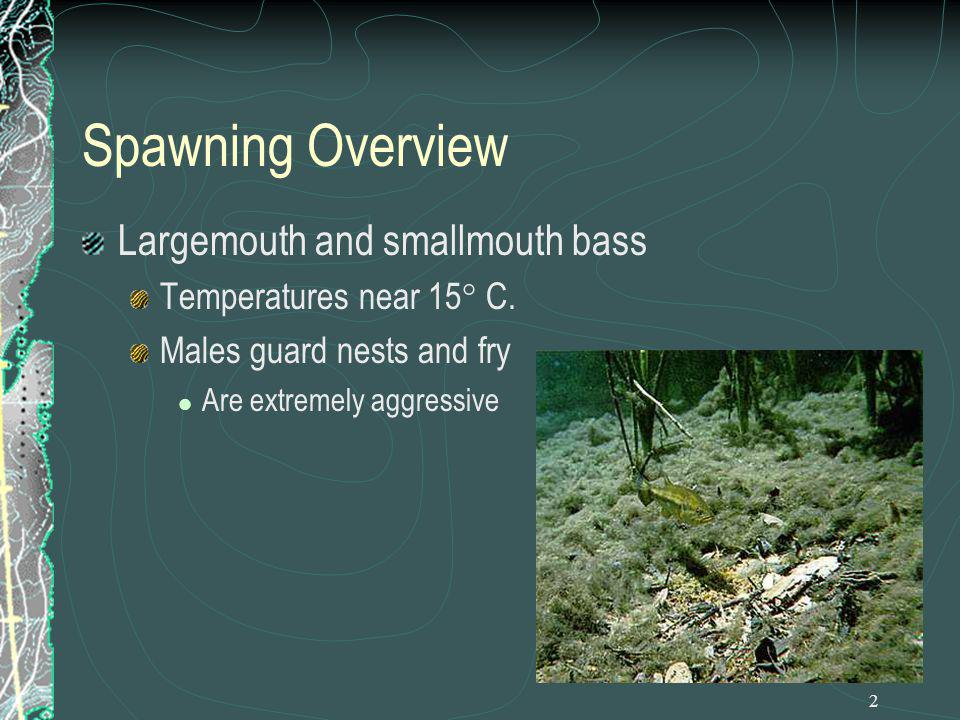 2 Spawning Overview Largemouth and smallmouth bass Temperatures near 15° C. Males guard nests and fry Are extremely aggressive