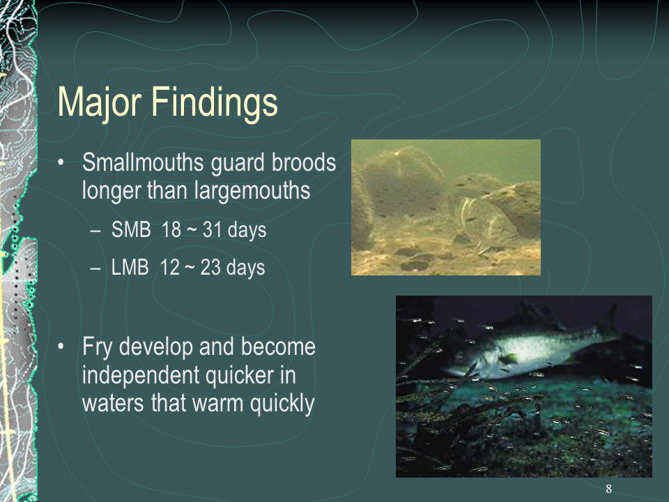 8 Major Findings Smallmouths guard broods longer than largemouths –SMB 18 ~ 31 days –LMB 12 ~ 23 days Fry develop and become independent quicker in wa