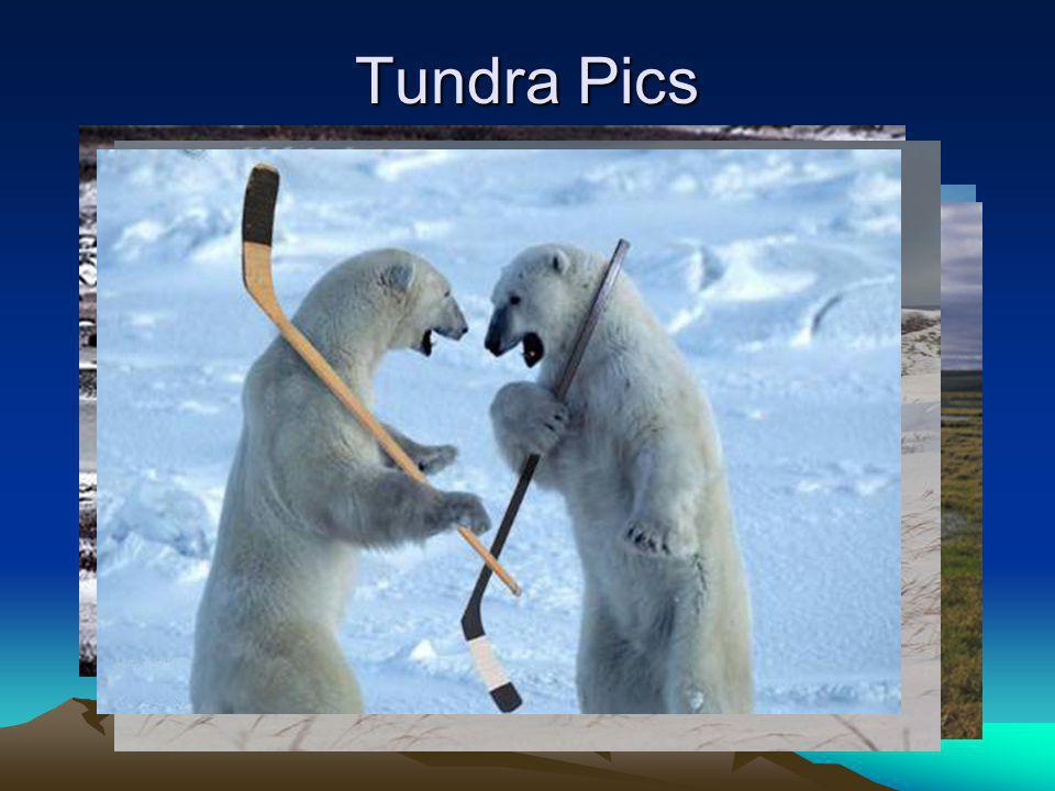 Tundra Pics