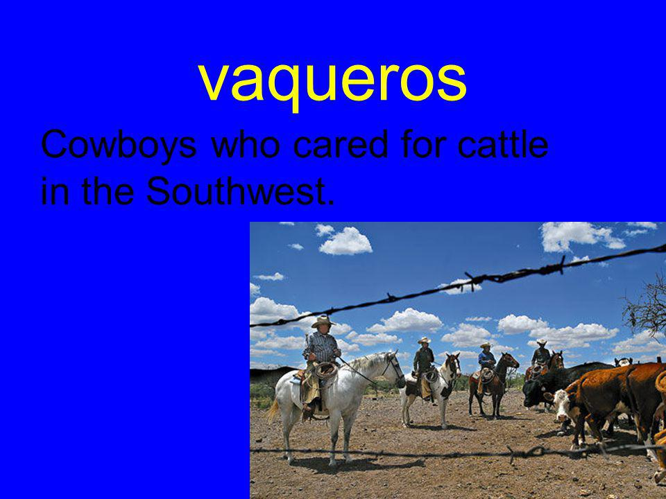 vaqueros Cowboys who cared for cattle in the Southwest.