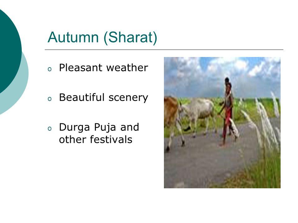 Late-Autumn (Hemanta ) o Pre-winter. o Harvest season