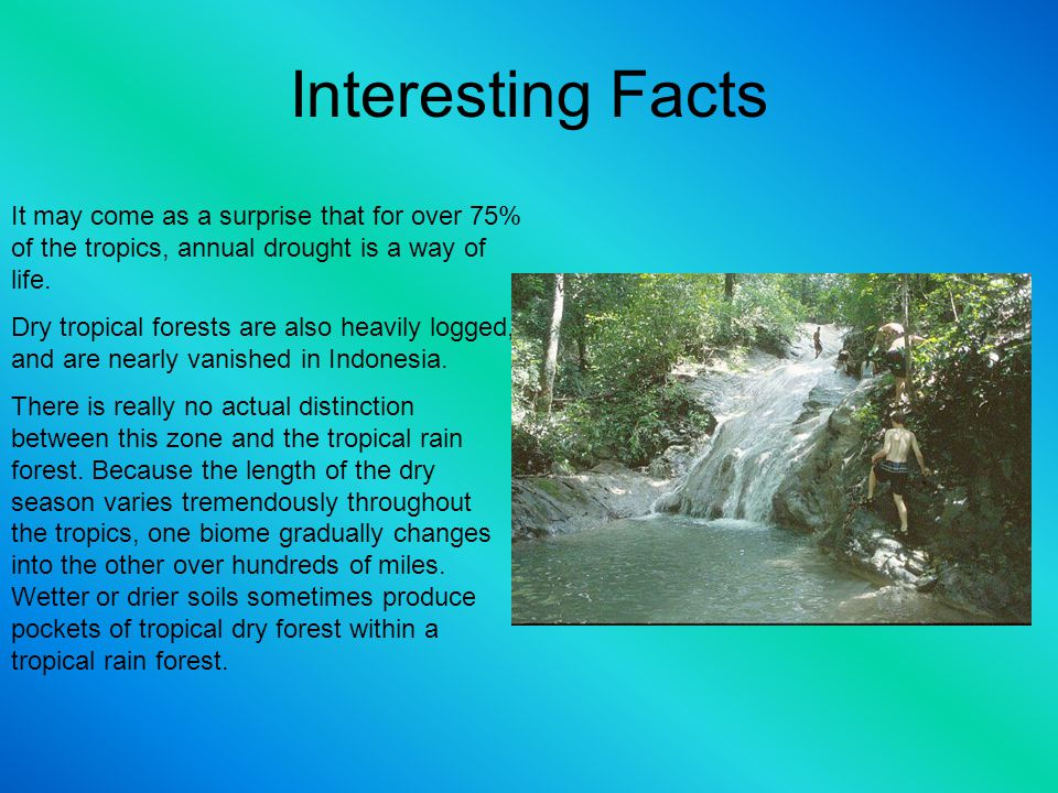 Interesting Facts It may come as a surprise that for over 75% of the tropics, annual drought is a way of life. Dry tropical forests are also heavily l