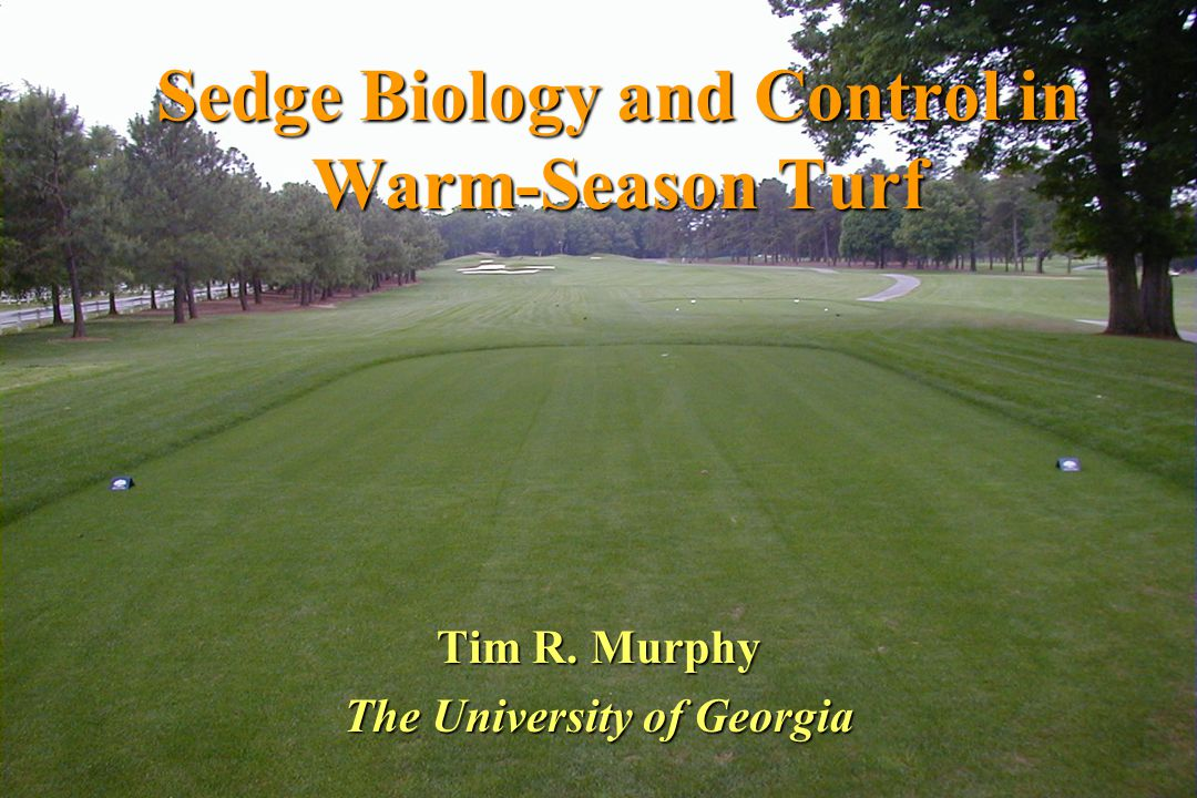 Sedge control ratings for selected turfgrass herbicides.