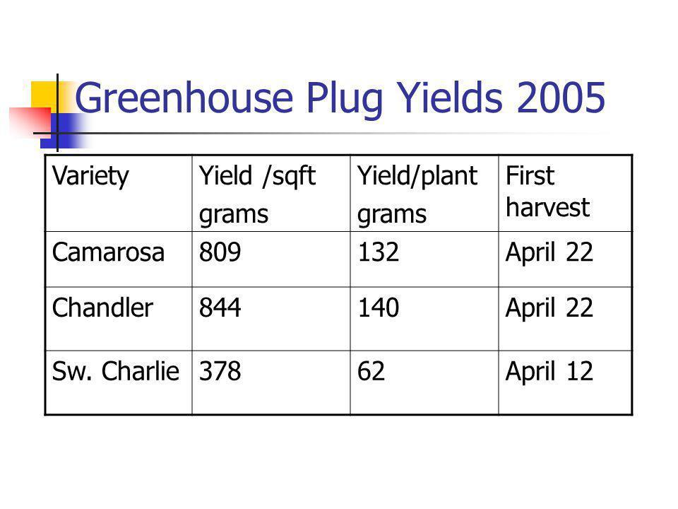 Greenhouse Plug Yields 2005 VarietyYield /sqft grams Yield/plant grams First harvest Camarosa809132April 22 Chandler844140April 22 Sw.