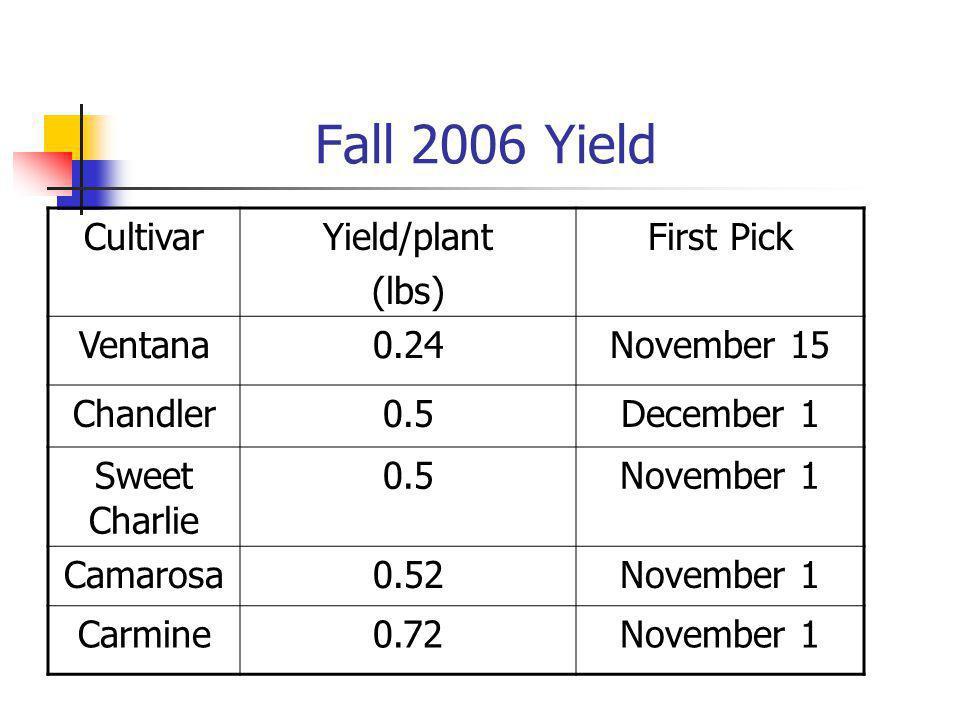 Fall 2006 Yield CultivarYield/plant (lbs) First Pick Ventana0.24November 15 Chandler0.5December 1 Sweet Charlie 0.5November 1 Camarosa0.52November 1 Carmine0.72November 1