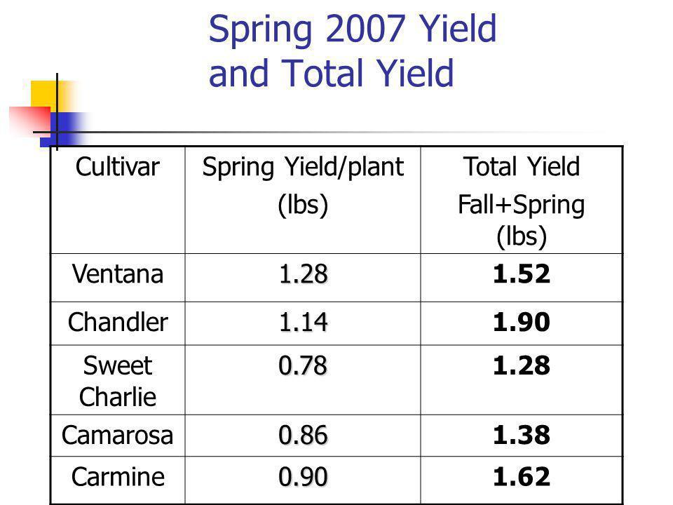 Spring 2007 Yield and Total Yield CultivarSpring Yield/plant (lbs) Total Yield Fall+Spring (lbs) Ventana1.281.52 Chandler1.141.90 Sweet Charlie0.781.28 Camarosa0.861.38 Carmine0.901.62