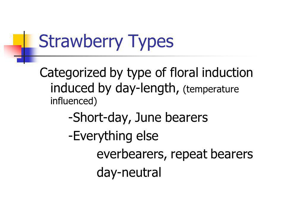 Strawberry Types Categorized by type of floral induction induced by day-length, (temperature influenced) -Short-day, June bearers -Everything else everbearers, repeat bearers day-neutral