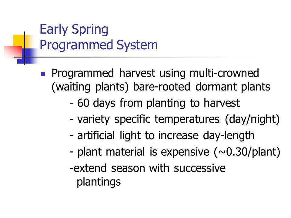 Early Spring Programmed System Programmed harvest using multi-crowned (waiting plants) bare-rooted dormant plants - 60 days from planting to harvest - variety specific temperatures (day/night) - artificial light to increase day-length - plant material is expensive (~0.30/plant) -extend season with successive plantings