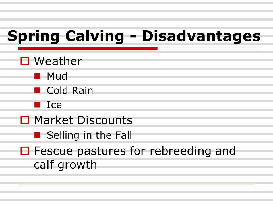 Spring Calving - Disadvantages Weather Mud Cold Rain Ice Market Discounts Selling in the Fall Fescue pastures for rebreeding and calf growth