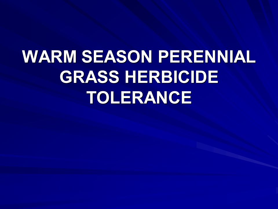WARM SEASON PERENNIAL GRASS HERBICIDE TOLERANCE Rate % Stand – 10/24 HerbicidesAmt/ABBCPSWINGG Pursuit DG* 1.44 oz 732741453 PlateauNIS 6 fl oz 0.25 % 8361725 Paramount* 8 oz 568274689 Untreated-5380665411 LSD (0.05) 252721257 * Applied with 1.25% COC and 2.5% UAN 28%.