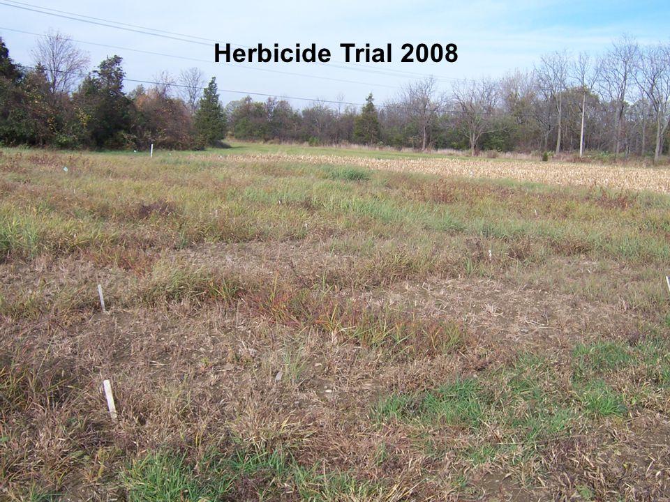 WARM SEASON PERENNIAL GRASS HERBICIDE TOLERANCE WSP Grasses Variety Big Bluestem Niagara Coastal Panicgrass Atlantic SwitchgrassCave-in-Rock Indiangrass Nebraska 54 Eastern Gamagrass Pete