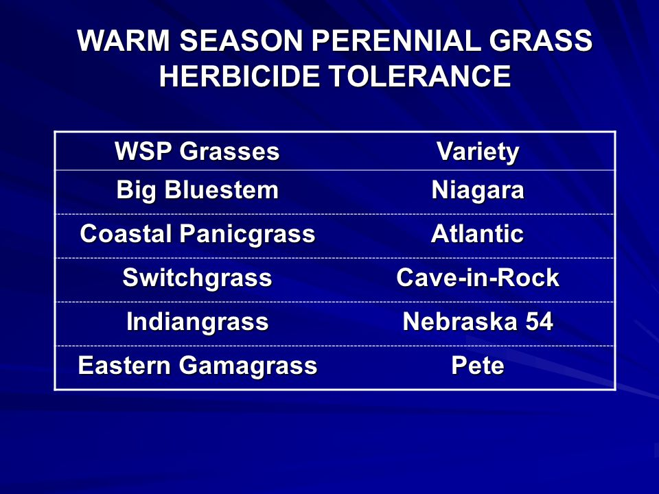 WARM SEASON PERENNIAL GRASS HERBICIDE TOLERANCE Planted –June 3, 2008 PRE treatments – June 10 Mowed – July 21 POST treatments – August 5 Evaluations: % Injury – August 20 % Stand – October 24 % Stand – October 24
