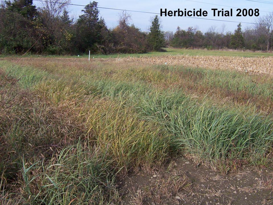 WARM SEASON PERENNIAL GRASS HERBICIDE TOLERANCE Rate % Stand – 10/24 HerbicidesAmt/ABBCPSWINGG AAtrex PRE 1 qt 8493897030 AAtrex PRE 2 qt 7773937324 AAtrex POST COC 1.5 qt 1.25 % 5591807119 Untreated-5380665411 LSD (0.05) 252721257