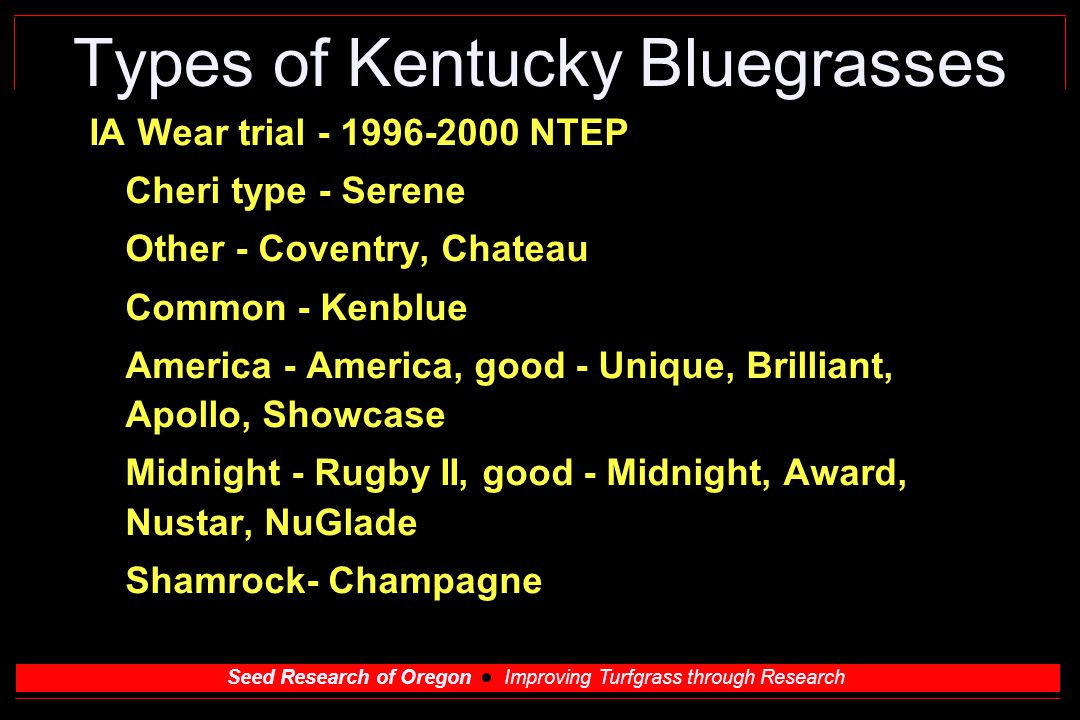 Seed Research of Oregon Improving Turfgrass through Research Types of Kentucky Bluegrasses IA Wear trial NTEP Cheri type - Serene Other - Coventry, Chateau Common - Kenblue America - America, good - Unique, Brilliant, Apollo, Showcase Midnight - Rugby II, good - Midnight, Award, Nustar, NuGlade Shamrock- Champagne