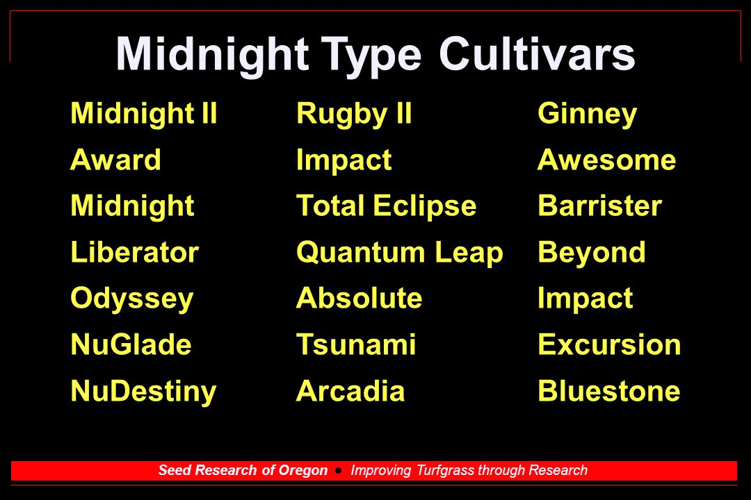 Seed Research of Oregon Improving Turfgrass through Research Midnight Type Cultivars Midnight IIRugby IIGinney AwardImpactAwesome MidnightTotal EclipseBarrister LiberatorQuantum LeapBeyond OdysseyAbsoluteImpact NuGladeTsunamiExcursion NuDestinyArcadiaBluestone