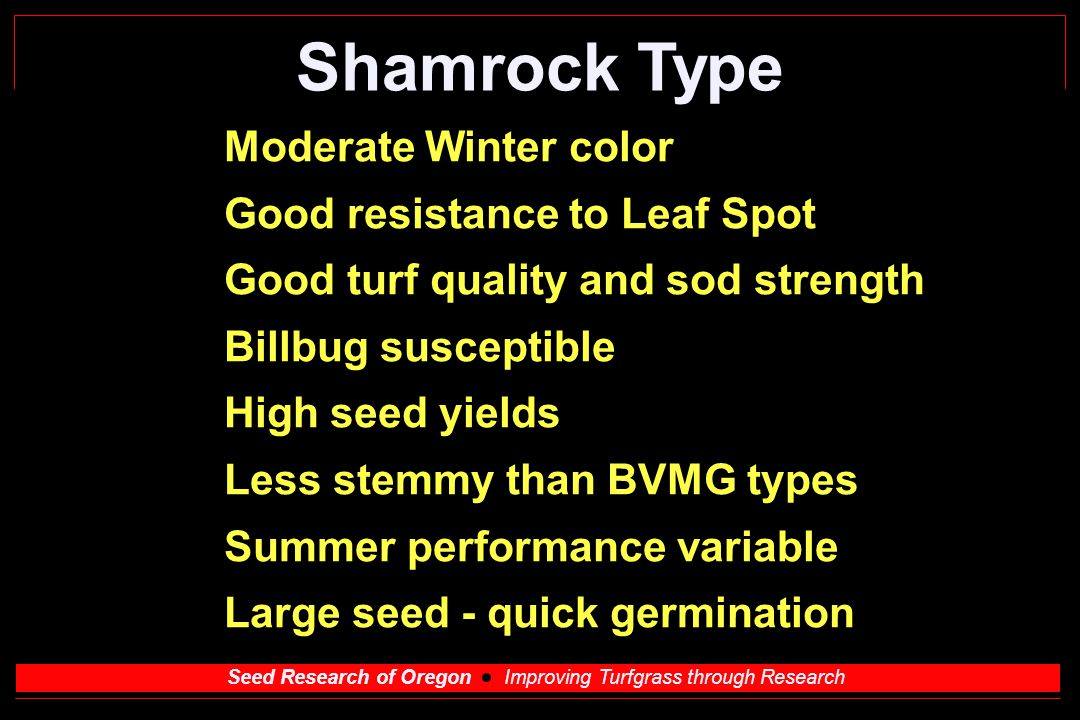 Seed Research of Oregon Improving Turfgrass through Research Shamrock Type Moderate Winter color Good resistance to Leaf Spot Good turf quality and sod strength Billbug susceptible High seed yields Less stemmy than BVMG types Summer performance variable Large seed - quick germination