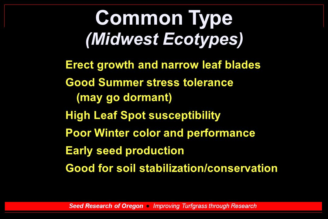 Seed Research of Oregon Improving Turfgrass through Research Common Type (Midwest Ecotypes) Erect growth and narrow leaf blades Good Summer stress tolerance (may go dormant) High Leaf Spot susceptibility Poor Winter color and performance Early seed production Good for soil stabilization/conservation