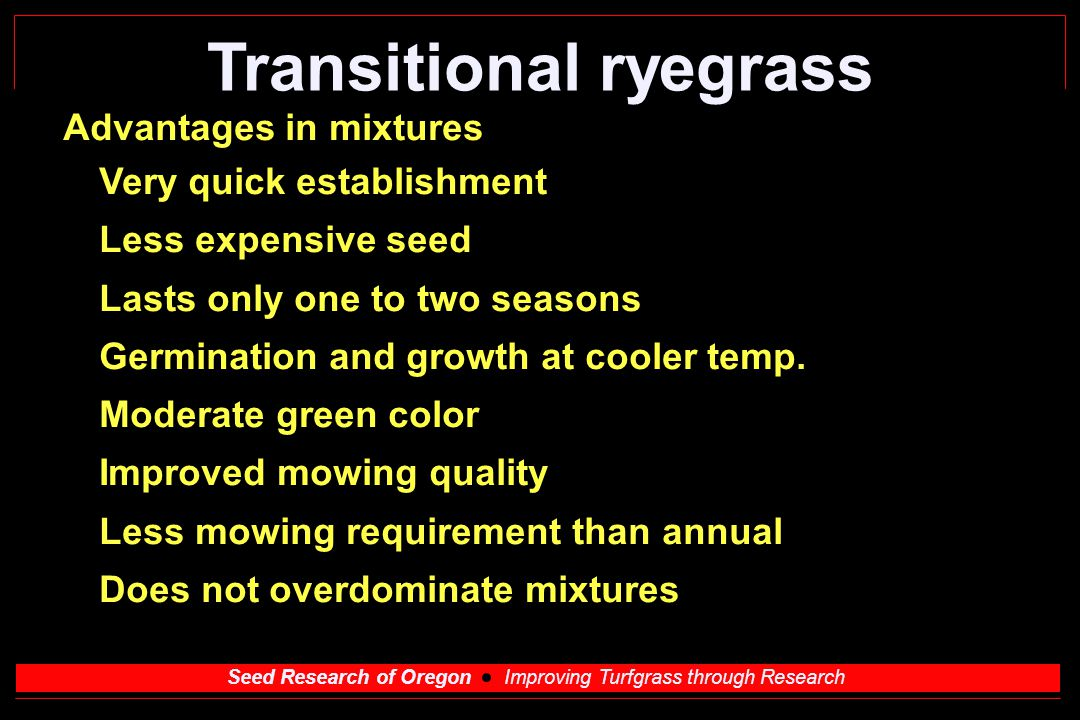 Seed Research of Oregon Improving Turfgrass through Research Transitional ryegrass Advantages in mixtures Very quick establishment Less expensive seed Lasts only one to two seasons Germination and growth at cooler temp.