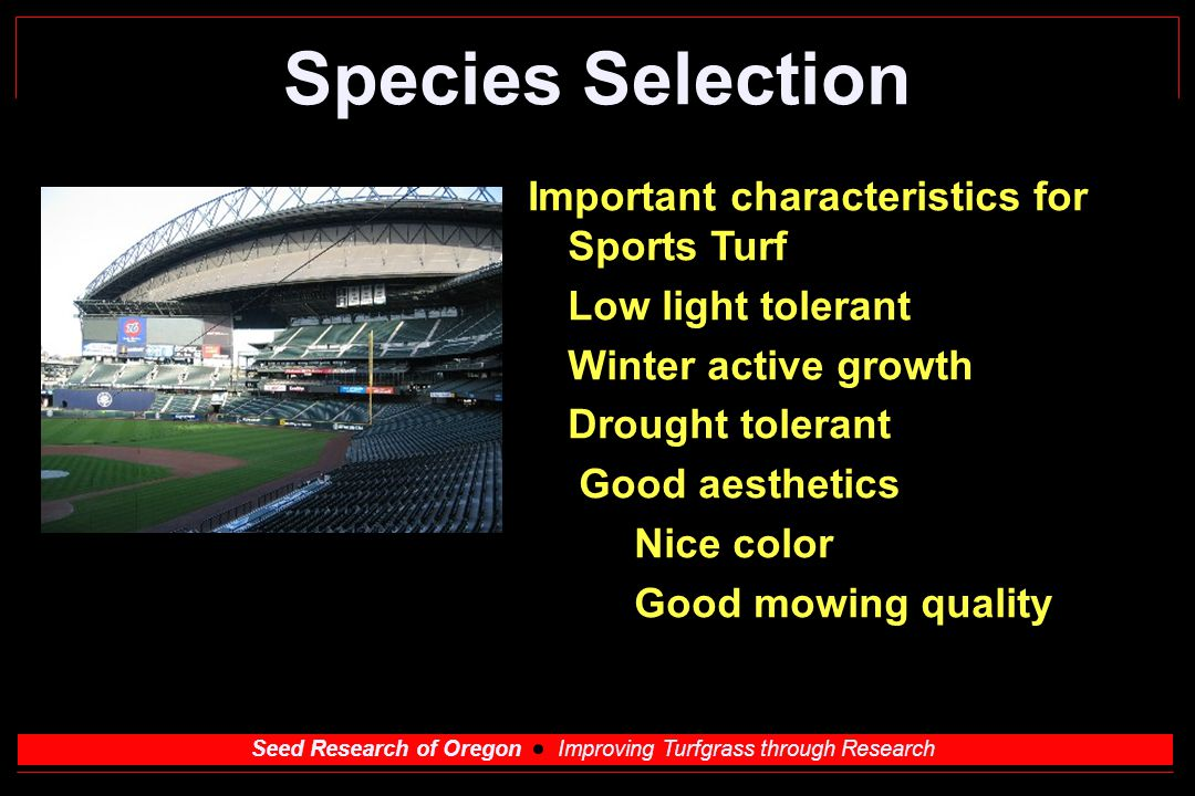Seed Research of Oregon Improving Turfgrass through Research Species Selection Important characteristics for Sports Turf Low light tolerant Winter active growth Drought tolerant Good aesthetics Nice color Good mowing quality