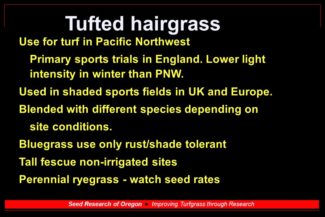Seed Research of Oregon Improving Turfgrass through Research Tufted hairgrass Use for turf in Pacific Northwest Primary sports trials in England.