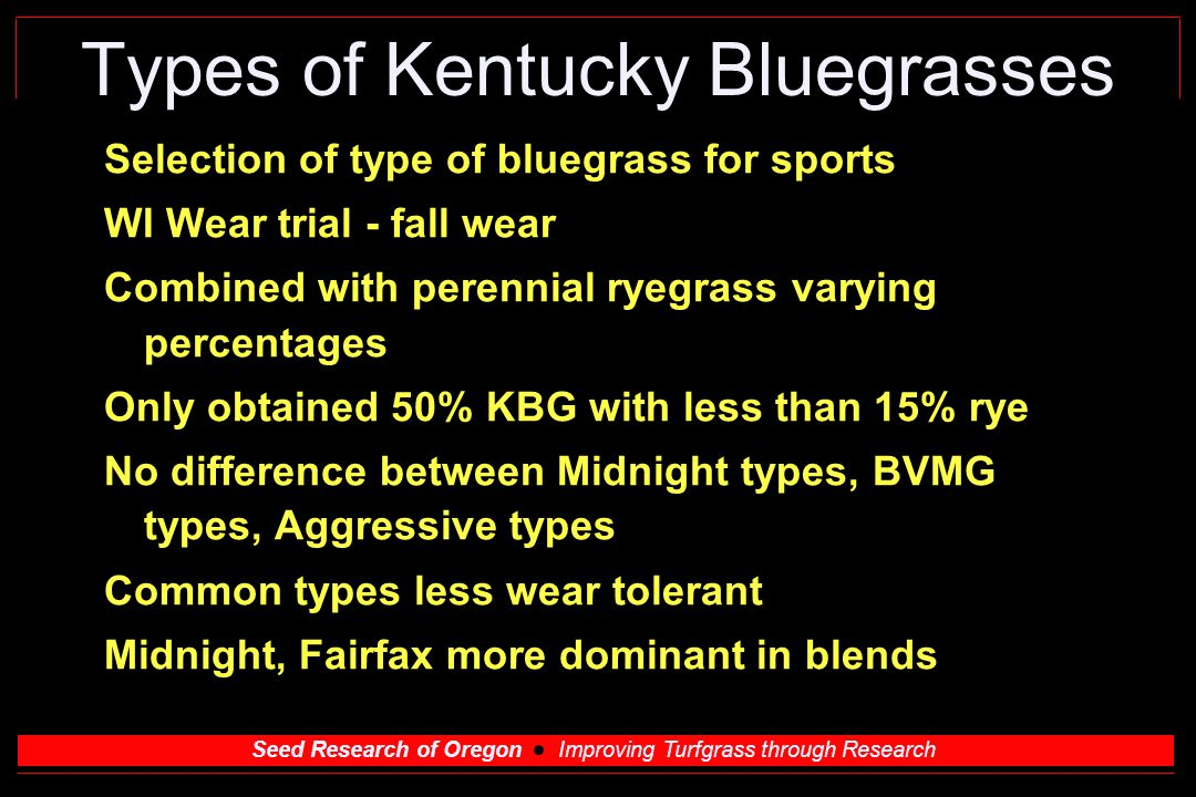 Seed Research of Oregon Improving Turfgrass through Research Types of Kentucky Bluegrasses Selection of type of bluegrass for sports WI Wear trial - fall wear Combined with perennial ryegrass varying percentages Only obtained 50% KBG with less than 15% rye No difference between Midnight types, BVMG types, Aggressive types Common types less wear tolerant Midnight, Fairfax more dominant in blends