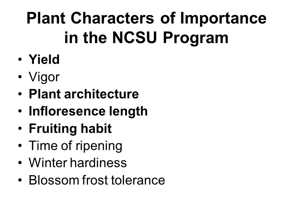 Plant Characters of Importance in the NCSU Program Yield Vigor Plant architecture Infloresence length Fruiting habit Time of ripening Winter hardiness Blossom frost tolerance