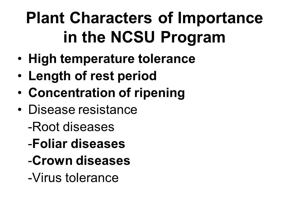 Plant Characters of Importance in the NCSU Program High temperature tolerance Length of rest period Concentration of ripening Disease resistance -Root diseases -Foliar diseases -Crown diseases -Virus tolerance