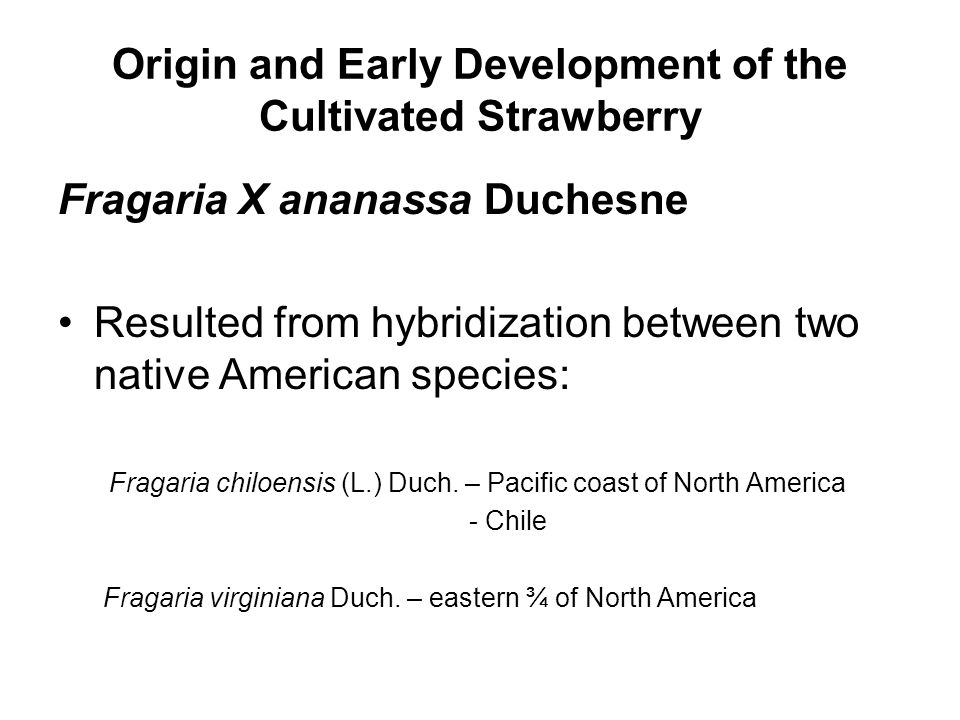 Origin and Early Development of the Cultivated Strawberry Fragaria X ananassa Duchesne Resulted from hybridization between two native American species: Fragaria chiloensis (L.) Duch.