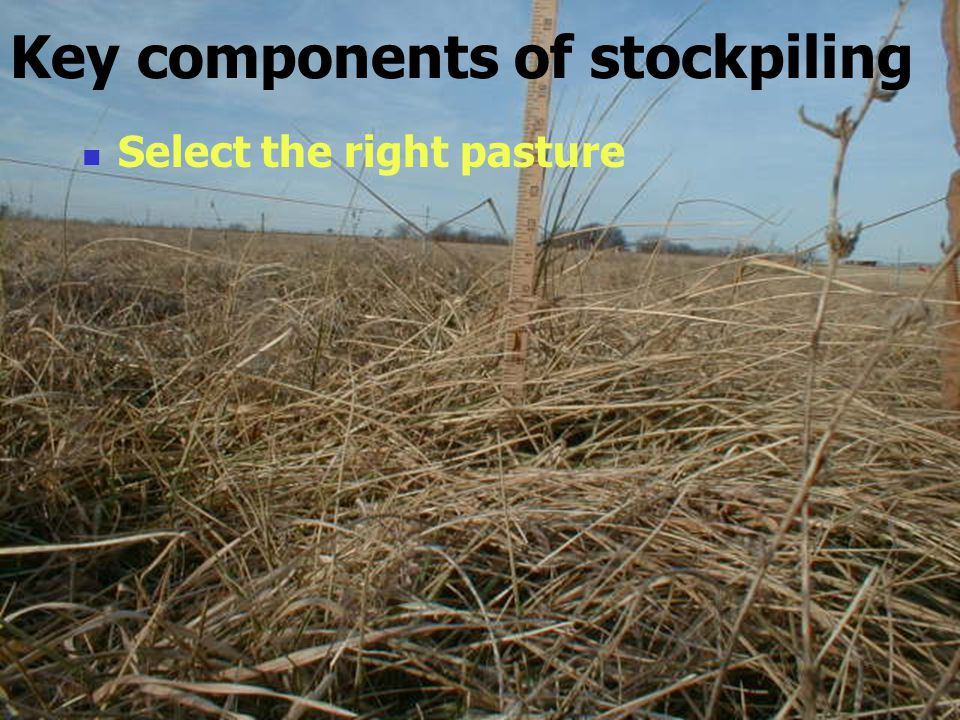 Key components of stockpiling Select the right pasture