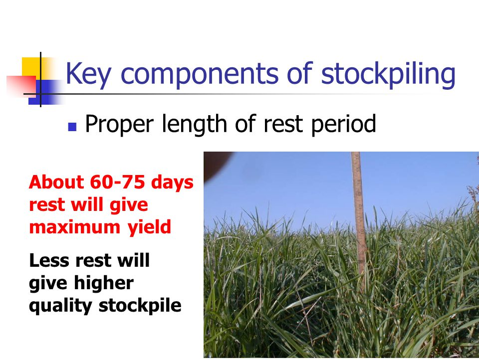 Key components of stockpiling Proper length of rest period About 60-75 days rest will give maximum yield Less rest will give higher quality stockpile